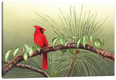 Sitting On The Bough Of The Day Canvas Art Print