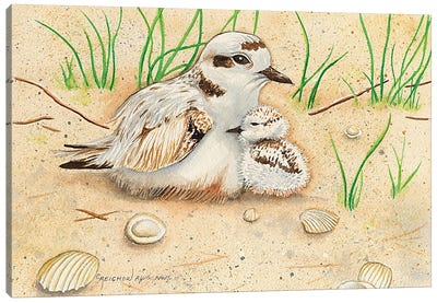 Snowy Plover Mom And Chick Canvas Art Print