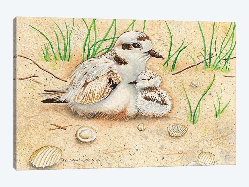 Snowy Plover Mom And Chick by Christine Reichow 1-piece Canvas Print