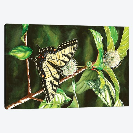 Swallowtail On Buttonbush Canvas Print #CTW60} by Christine Reichow Canvas Art