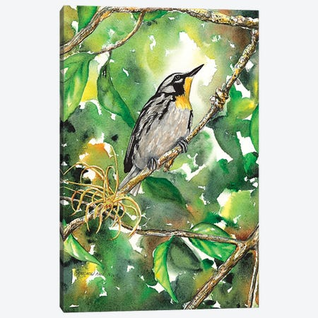 Yellow Throated Warbler Canvas Print #CTW68} by Christine Reichow Canvas Artwork