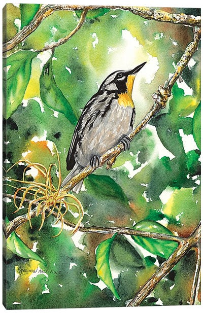 Yellow Throated Warbler Canvas Art Print