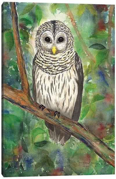 Barred Owl Canvas Art Print