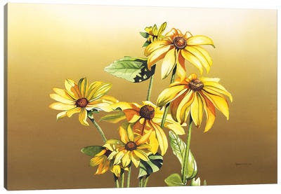 Black Eyed Susan Canvas Art Print