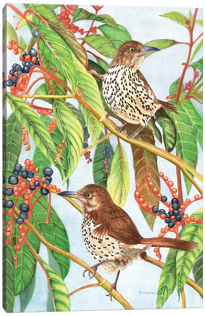 Brown Thrashers Canvas Art Print