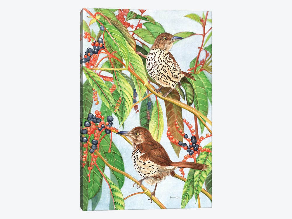 Brown Thrashers by Christine Reichow 1-piece Canvas Print