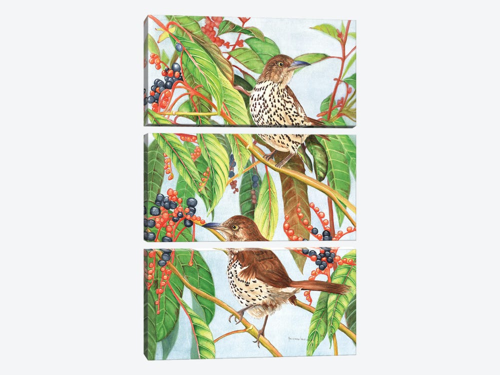 Brown Thrashers by Christine Reichow 3-piece Canvas Print