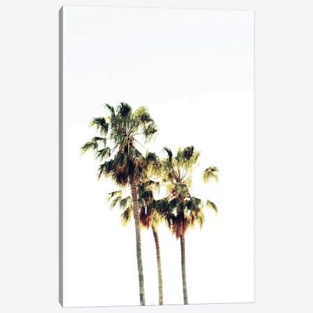 The Palms Blanc Canvas Print #CVA100} by Chelsea Victoria Art Print