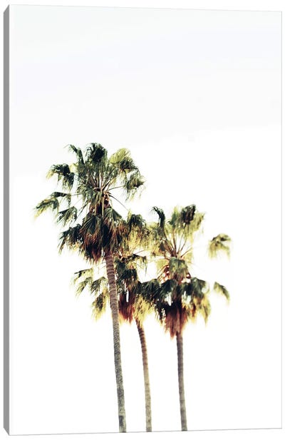 The Palms Blanc Canvas Art Print
