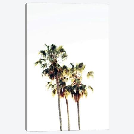 The Palms Blanc Canvas Print #CVA100} by Chelsea Victoria Art Print