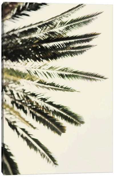 The Palms Canvas Art Print