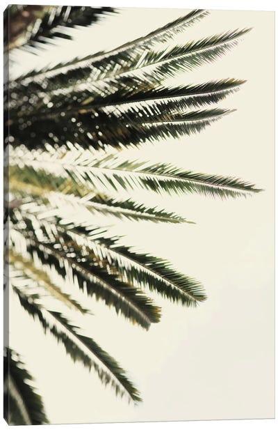 The Palms Canvas Art Print