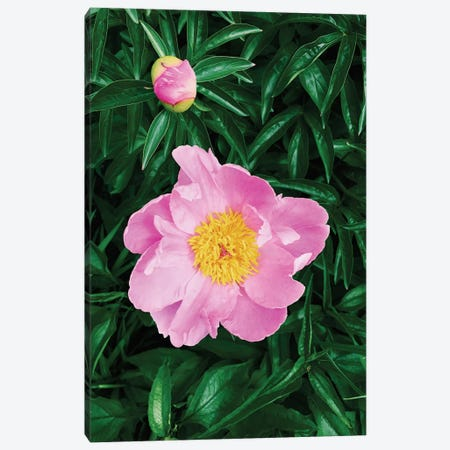 The Peony  Canvas Print #CVA102} by Chelsea Victoria Canvas Print