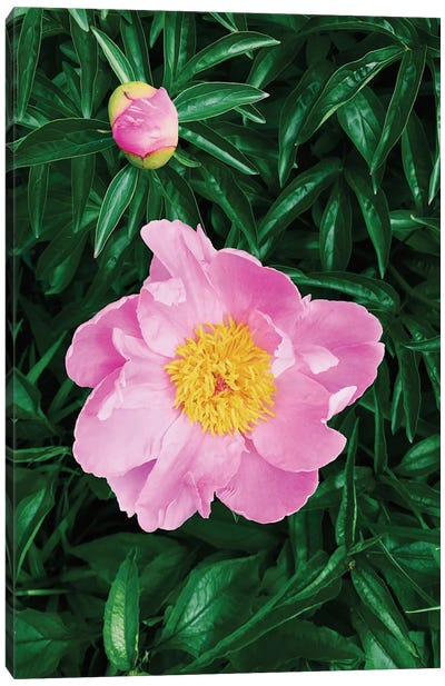 The Peony Canvas Art Print