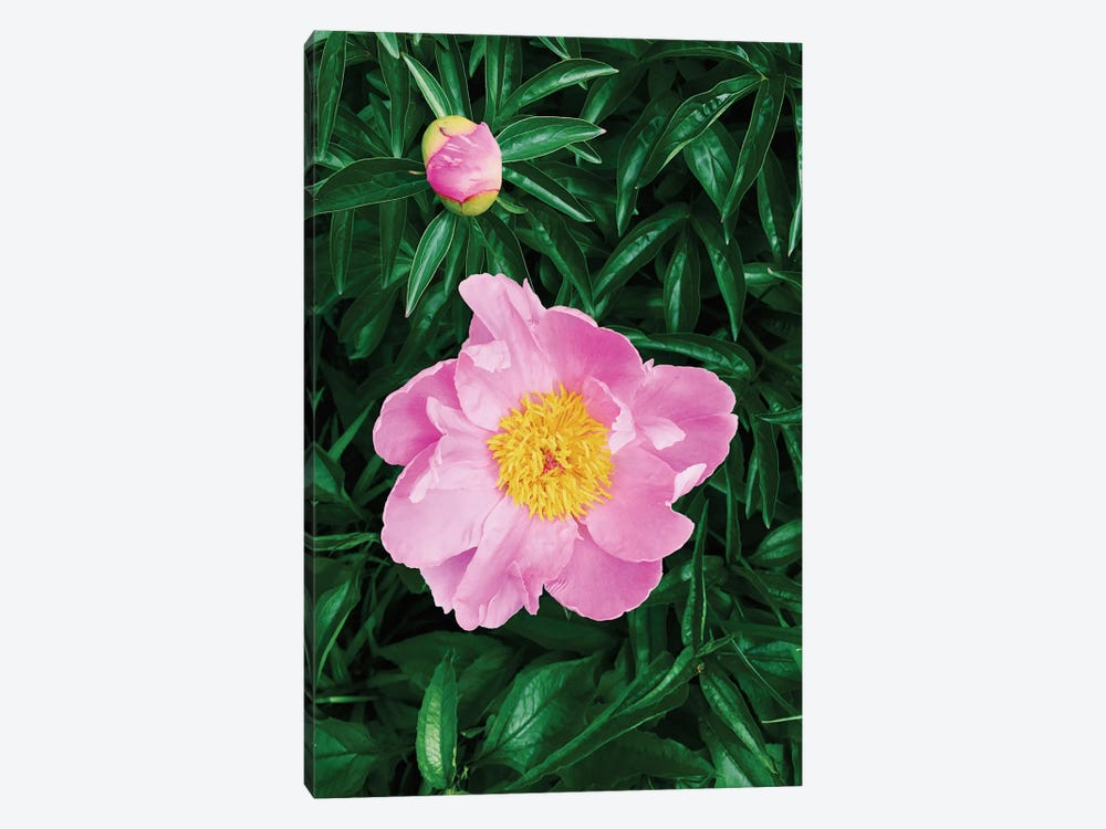 The Peony by Chelsea Victoria 1-piece Art Print