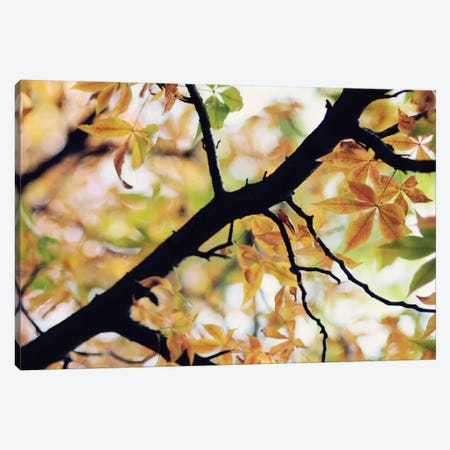 The Story Of Autumn Canvas Print #CVA104} by Chelsea Victoria Canvas Art