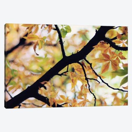 The Story Of Autumn Canvas Print #CVA104} by Chelsea Victoria Canvas Art