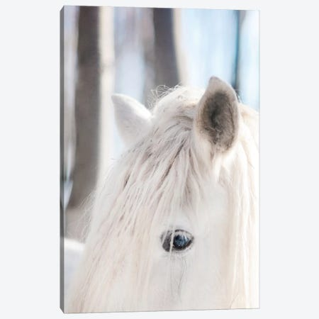White Horse Canvas Print #CVA117} by Chelsea Victoria Art Print