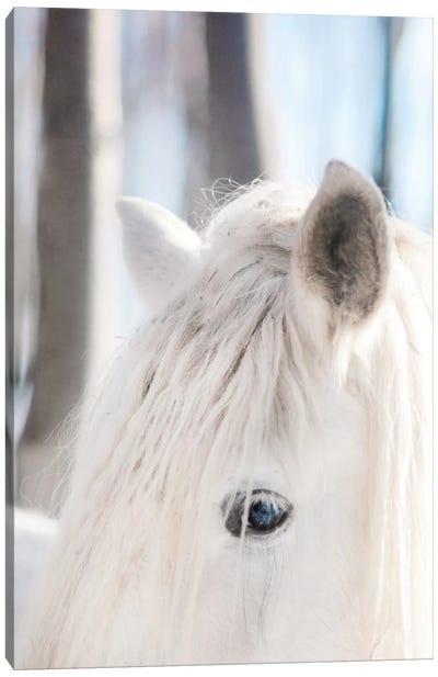 White Horse Canvas Print #CVA117