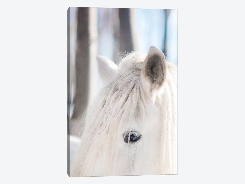 White Horse by Chelsea Victoria 1-piece Canvas Art Print