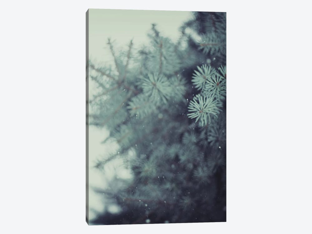Winter Pine by Chelsea Victoria 1-piece Canvas Art