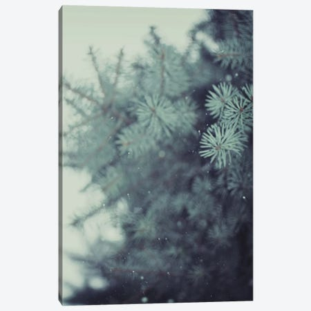 Winter Pine Canvas Print #CVA121} by Chelsea Victoria Canvas Print