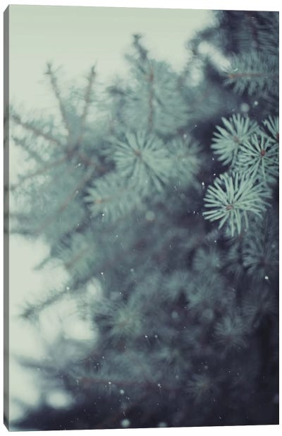 Winter Pine Canvas Art Print