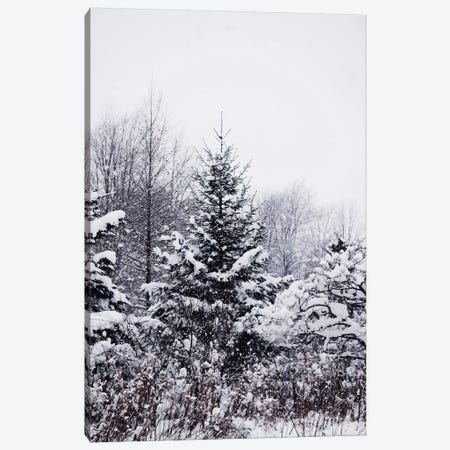 Winter Pines Canvas Print #CVA122} by Chelsea Victoria Canvas Print