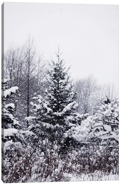 Winter Pines Canvas Art Print