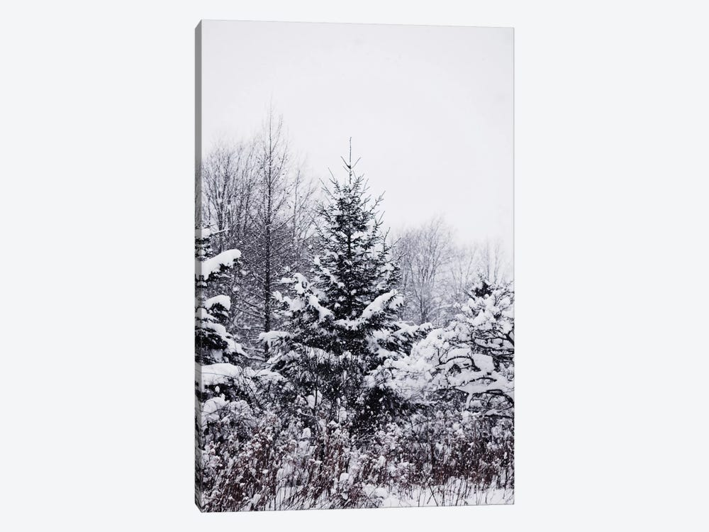 Winter Pines 1-piece Canvas Art Print