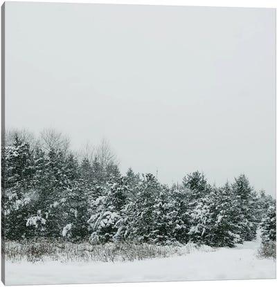 Winter Shades II Canvas Art Print