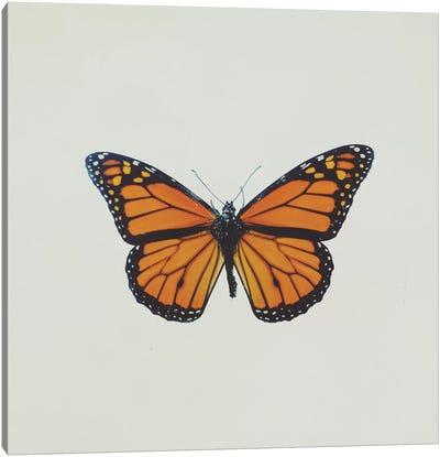 Butterfly Canvas Print #CVA126
