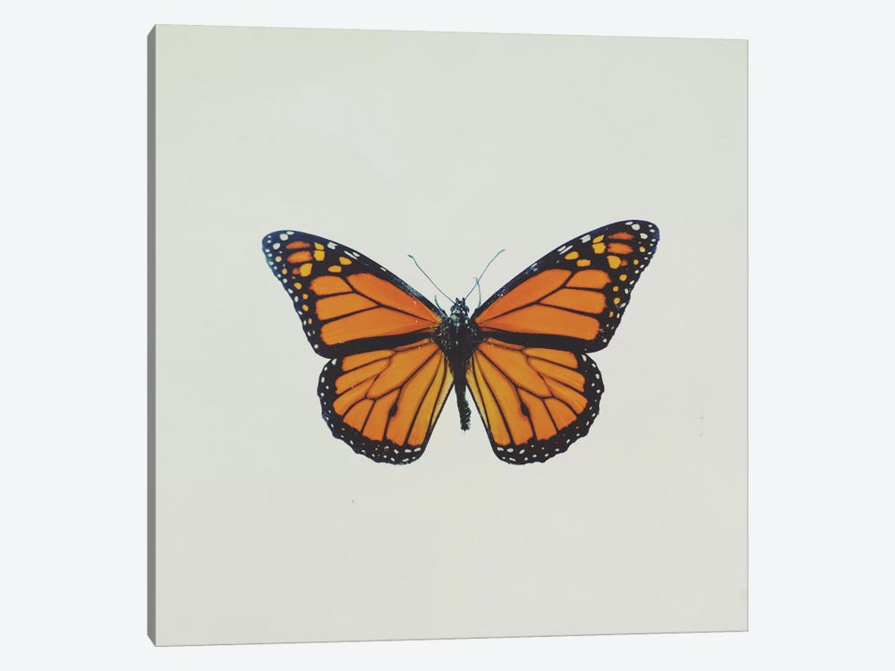 Butterfly by Chelsea Victoria 1-piece Art Print