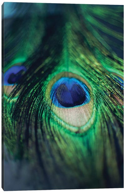Peacock Feathers I Canvas Art Print