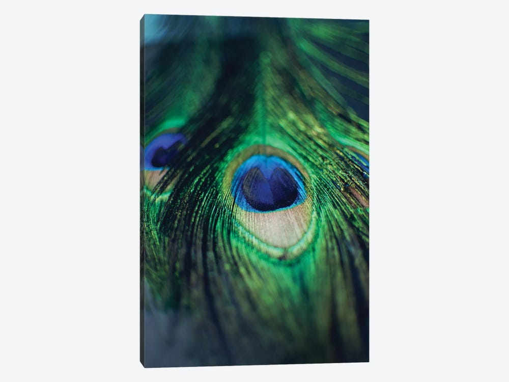 Peacock Feathers I by Chelsea Victoria 1-piece Canvas Art