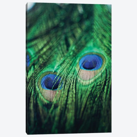 Peacock Feathers II Canvas Print #CVA133} by Chelsea Victoria Canvas Wall Art