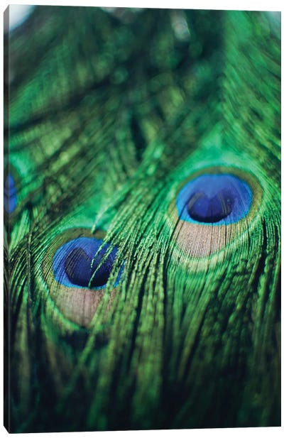 Peacock Feathers II Canvas Art Print