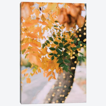 Autumn Sparkle Canvas Print #CVA136} by Chelsea Victoria Art Print