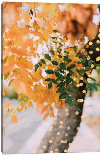 Autumn Sparkle Canvas Art Print