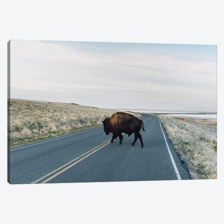 Buffalo Bison Canvas Print #CVA137} by Chelsea Victoria Canvas Print