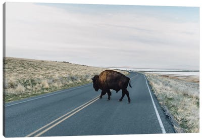 Buffalo Bison Canvas Art Print