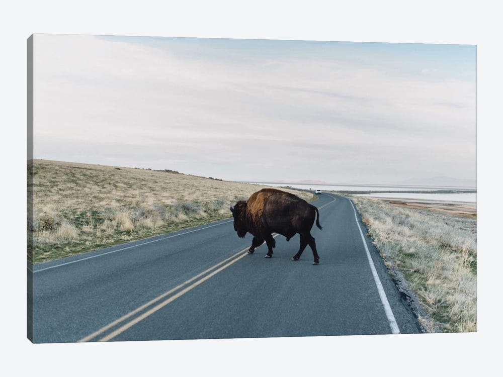 Buffalo Bison 1-piece Canvas Art Print