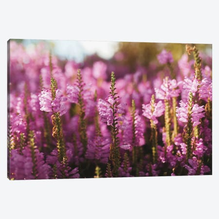 Desert Floral Canvas Print #CVA139} by Chelsea Victoria Canvas Art