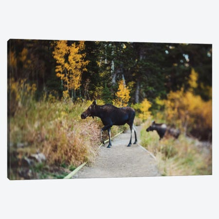 Moose Crossing Canvas Print #CVA140} by Chelsea Victoria Canvas Print