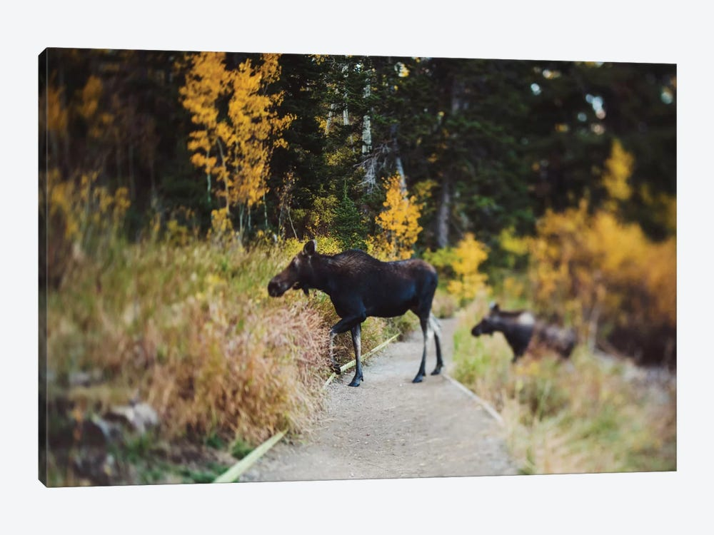 Moose Crossing by Chelsea Victoria 1-piece Canvas Print