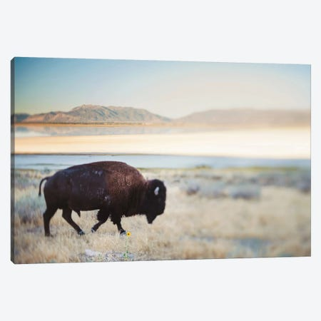 The Anonymous Buffalo Canvas Print #CVA146} by Chelsea Victoria Canvas Art