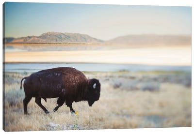 The Anonymous Buffalo Canvas Art Print