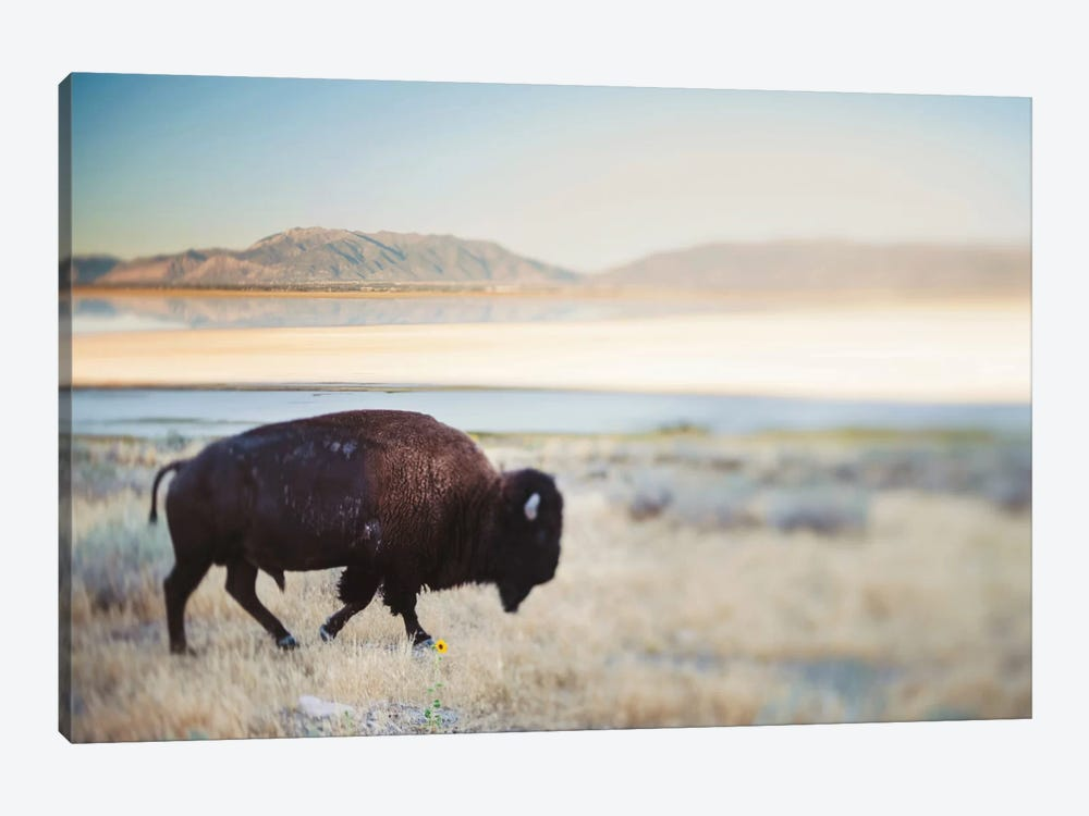 The Anonymous Buffalo by Chelsea Victoria 1-piece Canvas Print