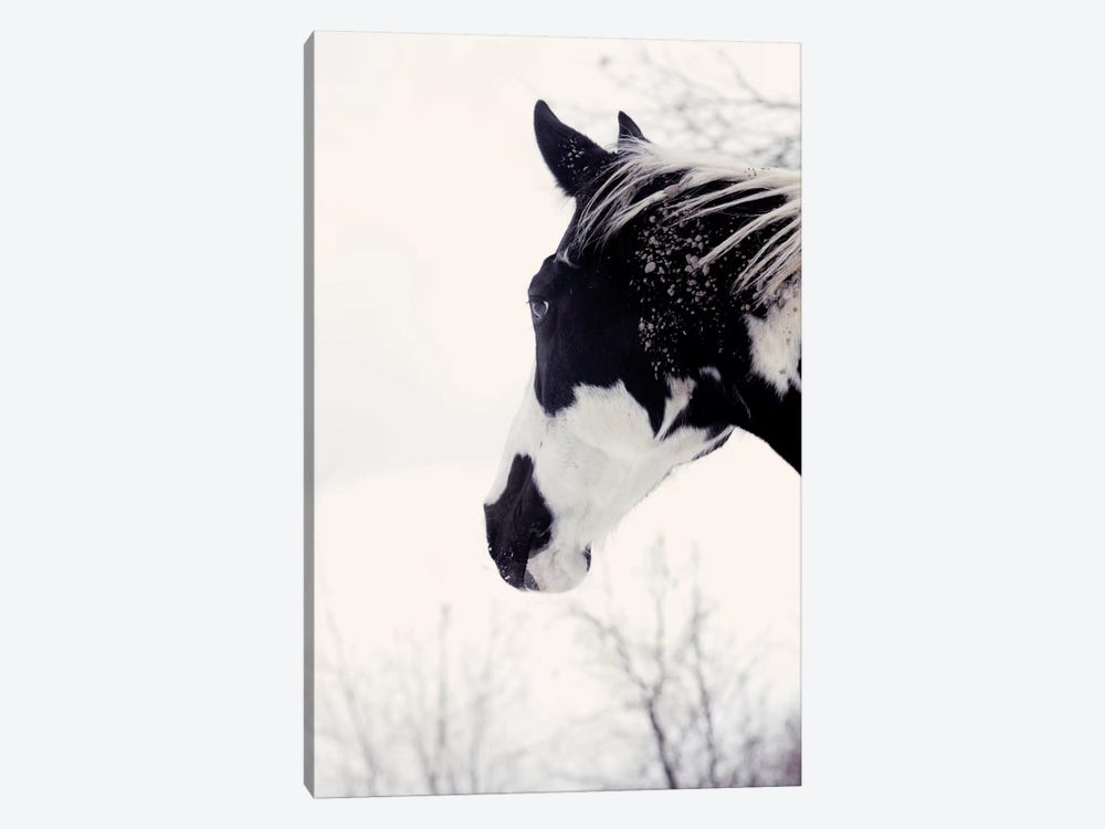 Chip I by Chelsea Victoria 1-piece Canvas Print