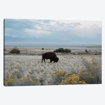 Bison In The Field Canvas Print #CVA151} by Chelsea Victoria Canvas Wall Art